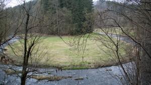 Das Polenztal zur Märzenbecherblüte
